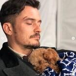 オーランド・ブルーム、愛犬の死から4か月 保護犬を家族として迎え入れる