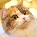 猫ちゃんをかわいく撮るコツ。フラッシュはオフでね/中学生動物写真家・藍沙