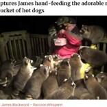 アライグマにまみれながら餌やりする男性「亡き妻の願いだった」(カナダ)<動画あり>