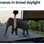 バスを止めたゾウが車内のバナナを横取り 白昼堂々の犯行に唖然(スリランカ)<動画あり>