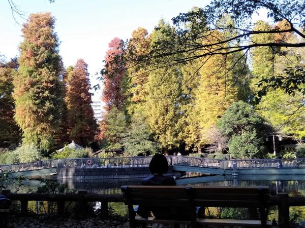 吉祥寺井の頭公園紅葉3