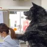 愛犬に仕事を邪魔されている女性 写真に「二度見した」「クマかな?」