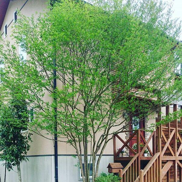 シンボルツリーにおすすめの庭木13