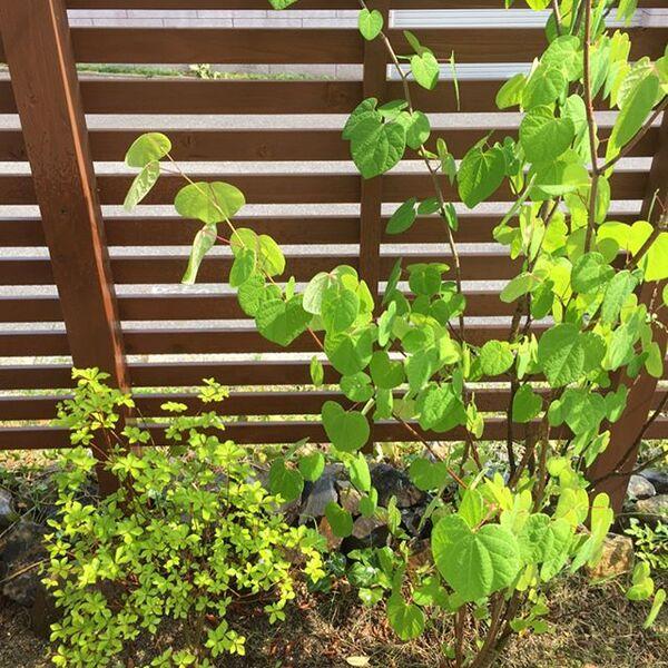 シンボルツリーにおすすめの庭木15