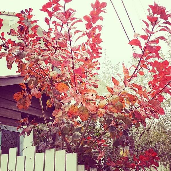 シンボルツリーにおすすめの庭木2