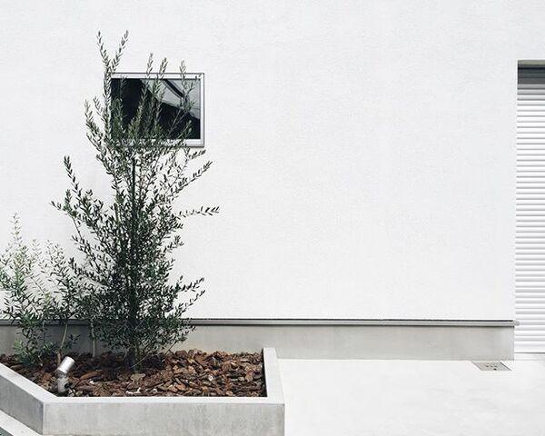 シンボルツリーにおすすめの庭木5