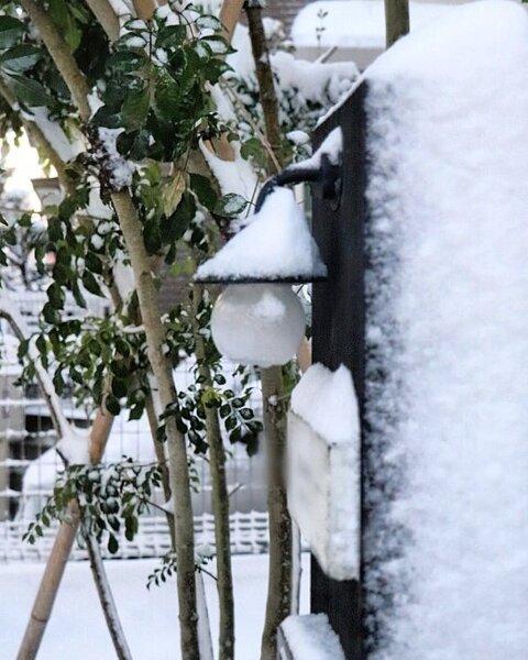 シンボルツリーにおすすめの庭木8