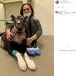 妊娠中の犬、大火傷を負いながらも火事を知らせホスピスの4人を救う(露)