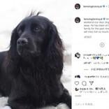 【イタすぎるセレブ達・番外編】ウィリアム王子・キャサリン妃一家の愛犬が天国へ 妃の弟ジェームズさんも追悼