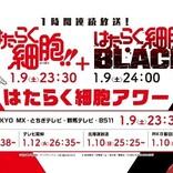 TVアニメ『はたらく細胞BLACK』第2弾PV公開 詳細情報も解禁 そして『はたらく細胞』第2期EDテーマはClarisに決定 コメントも各種到着