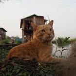 ネコが湖へダイブ! 『岩合光昭の世界ネコ歩き』中村倫也ナレーション予告公開