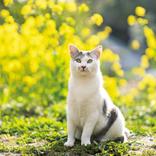 癒やされる街ランキングTOP5。猫が多い、女性と出会える