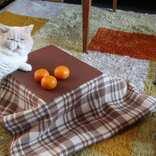 猫もこたつに入りたい?猫専用こたつ付きみかん「猫と、こたつと、思い出みかん」予約開始だよ   News