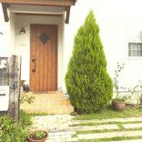目隠しになる木おすすめ16選!庭の雰囲気を壊さないおしゃれに見える植物とは?