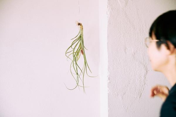 吊るした植物