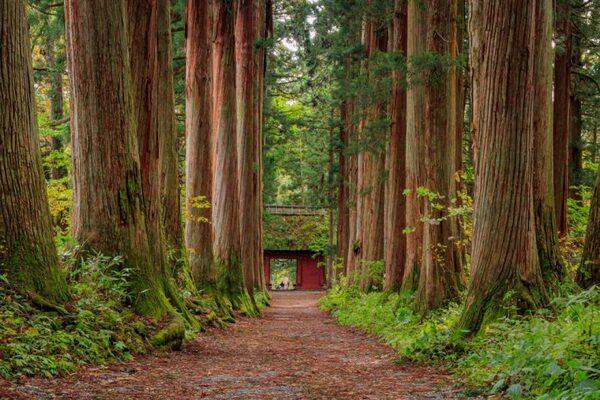 おすすめ観光スポット⑦戸隠神社