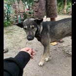 走行中の運転手に吠え続けて、新生児が捨てられていることを伝えた犬(フィリピン)