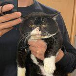 1歳なのに長老っぽい猫・もんたが大人気。飼い主は「譲渡会で一目ぼれ」