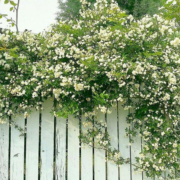 廃材の素朴さを生かした庭の目隠し
