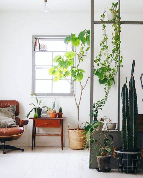 観葉植物が素敵なインテリア4