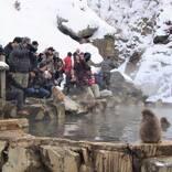 冬の秘湯は最高のパワースポット(10)スノーモンキーに会いに湯田中温泉郷へ<長野県>