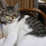 12歳で旅立った愛猫ルナちゃん。「僕はルナの椅子、クッションでした」