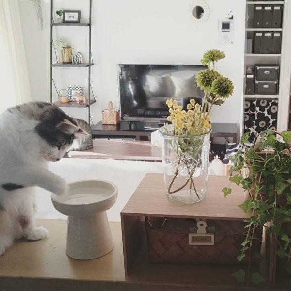 キッチンカウンターを飾るドライフラワー