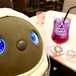 可愛すぎると話題のロボット「LOVOT(らぼっと)」に骨抜きにされるカフェ / 「LOVOTカフェ」川崎