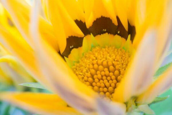 「希望」を意味する花言葉を持つ花3選《夏の花》