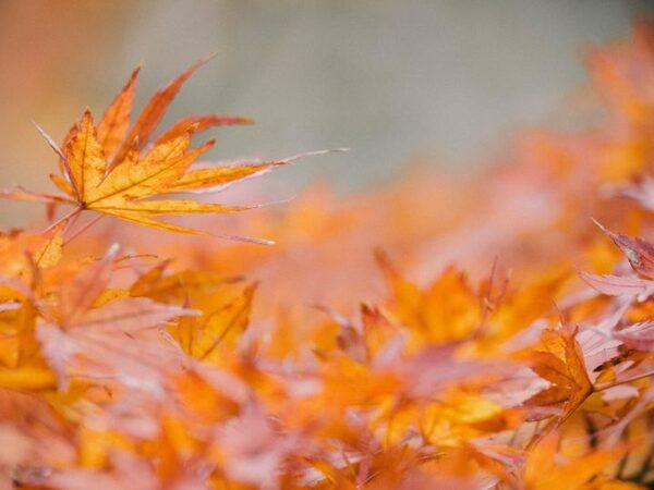 「希望」を意味する花言葉を持つ花3選《秋の花》