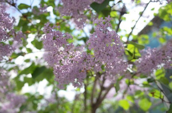 「希望」を意味する花言葉を持つ花3選《通年の花》