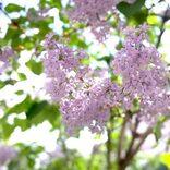 未来への「希望」を意味する花言葉を持つ花15選。夢に向かう人への贈り物にも最適