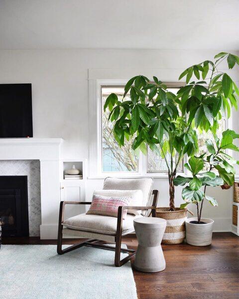 高く伸びる観葉植物がリラックス感を演出
