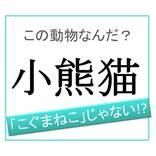 【動物漢字】「こぐまねこ」ではありません!「小熊猫」は何と読む?