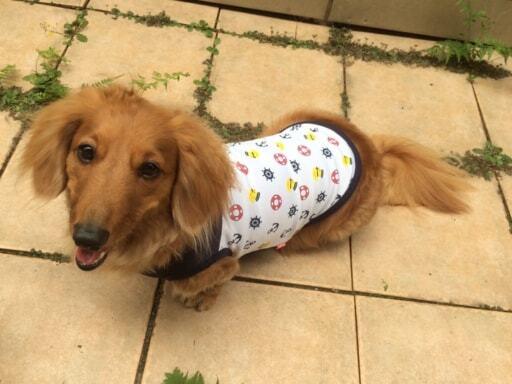 ドッグウエアは必ず愛犬の体のサイズを測定し購入を!