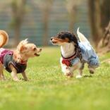 ドッグウエアは愛犬の体調管理に重要。選び方を専門家が詳しく解説