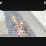 iPhoneの写真アプリなら、動画も編集できる?