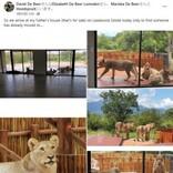 野生保護区内の住宅でベランダにライオンの群れ「この家の警備は最強」(南ア)<動画あり>