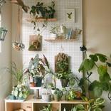 部屋探しもレイアウトも、家主より植物を最優先。傷んだ植物を療養する、ちいさな実験室|みんなの部屋(世田谷)