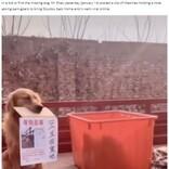 """さらわれた""""親友""""に「帰ってきて」 飼い主が書いたメッセージをくわえて情報提供を呼びかける犬(中国)<動画あり>"""