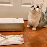 """猫飼いさん絶賛!抜け毛のお掃除に、""""ありそうでなかった""""新感覚お掃除家電が話題"""