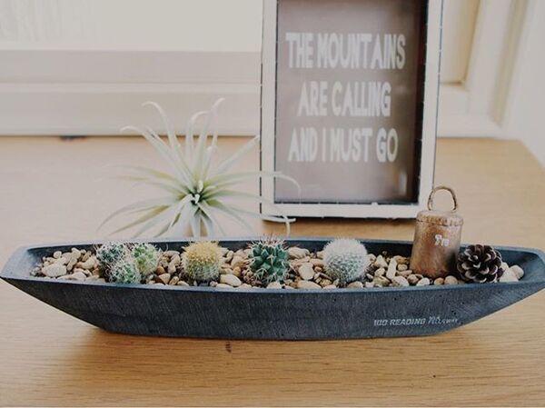 サボテン インテリア 飾り方 1鉢