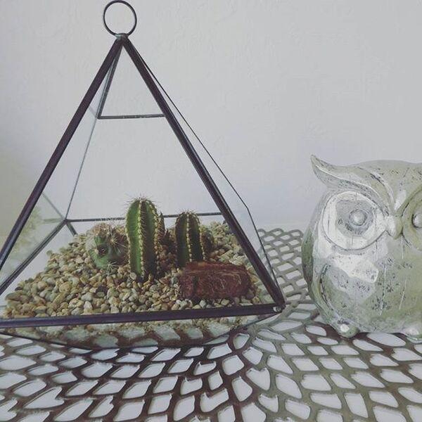 サボテン インテリア 飾り方 鉢2