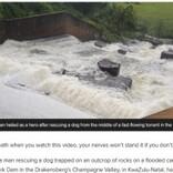 ダムの岩場に取り残された犬を濁流の中で救出した男性「放っておけなかった」(南ア)<動画あり>