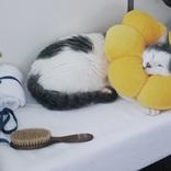 スヤァと眠るポン・デ・ニャイオン!? いい具合のクッションで可愛さマシマシ