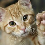 アニマルプラネットの2月は毎日猫づくし。8つの新番組を含む猫番組を毎日放送