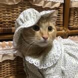【あらかわいい】猫のために服を作ってくれたおばあちゃん。その似合いすぎな姿に「センス良いですね」「おばあちゃん最高か!!」と称賛の声