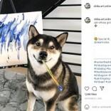 絵を描く柴犬、画家デビュー4年で売り上げ190万円超に!(カナダ)<動画あり>