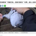 レース鳩を狙う誘拐犯6人逮捕 その価値370万円のサラブレッド鳩を保護(台湾)