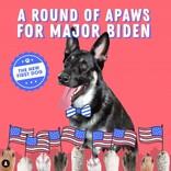 全米が興奮、保護犬がファーストドッグへ大出世。ホワイトハウス入りしたワンニャンたち